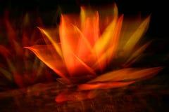 Abstracte bloem bij Middernacht Royalty-vrije Stock Afbeeldingen