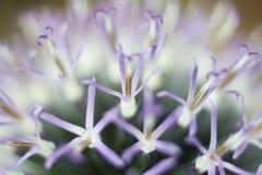 Abstracte bloemachtergrond Stock Fotografie