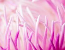 Abstracte bloemachtergrond Macro fotografie stock fotografie