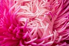 Abstracte bloemachtergrond Macro fotografie royalty-vrije stock foto's