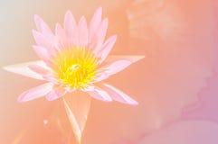 Abstracte bloemachtergrond met de roze filters van de bloemkleur Stock Afbeeldingen
