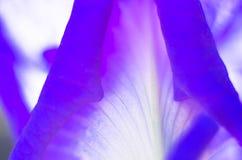 Abstracte bloemblaadje donkere purpere achtergrond Royalty-vrije Stock Fotografie