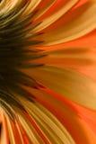 Abstracte Bloemblaadjes Stock Foto