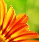 Abstracte bloembloemblaadjes, kleurrijke bloemengrens Royalty-vrije Stock Foto's
