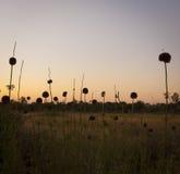 Abstracte Bloemen bij Schemer Royalty-vrije Stock Foto's