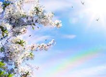 Abstracte bloemen de lenteachtergrond Royalty-vrije Stock Afbeelding