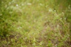 Abstracte bloemen vage achtergrond Royalty-vrije Stock Afbeelding