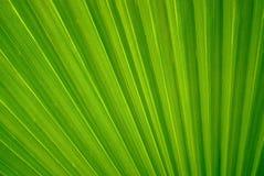 Abstracte bloemenachtergrond - fragment van een blad van een palm royalty-vrije stock afbeelding