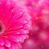 Abstracte bloemenachtergrond met bokeh Royalty-vrije Stock Foto