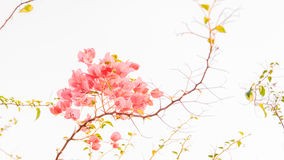 Abstracte bloemenachtergrond met roze bloemen Royalty-vrije Stock Afbeeldingen