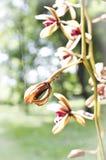 Abstracte bloemenachtergrond in uitstekende stijl Stock Fotografie