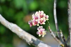 Abstracte bloemenachtergrond in uitstekende stijlorchidee Stock Fotografie
