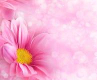 Abstracte bloemenachtergronden Royalty-vrije Stock Afbeelding