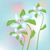 Abstracte bloemenillustratie als achtergrond Royalty-vrije Stock Fotografie
