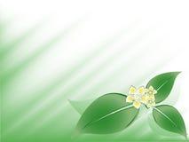 Abstracte bloemenvector Royalty-vrije Stock Afbeeldingen