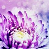 Abstracte bloemillustratie Stock Foto's