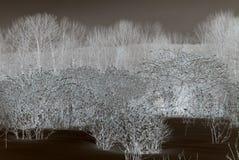 Abstracte Bomen en Struiken Royalty-vrije Stock Fotografie