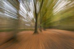 Abstracte bomen in het bos royalty-vrije stock fotografie