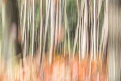 Abstracte bomen in het bos royalty-vrije stock foto