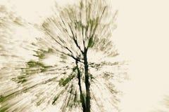Abstracte boom Stock Afbeeldingen
