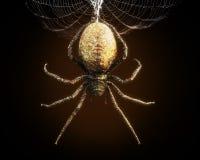 Abstracte close-up van een reusachtige spin die van zijn Web bengelen stock illustratie