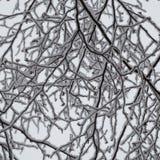Abstracte close-up van sneeuw geladen berktakken die omhoog eruit zien Royalty-vrije Stock Afbeeldingen