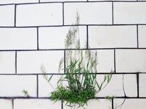 Abstracte close-upmening van gras op witte tegelachtergrond Stock Afbeeldingen