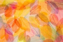 Abstracte de herfstachtergrond Stock Foto's