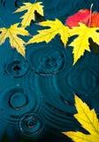 Abstracte de herfstachtergrond met gele bladeren stock foto's