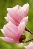 Abstracte de lenteachtergrond Royalty-vrije Stock Fotografie