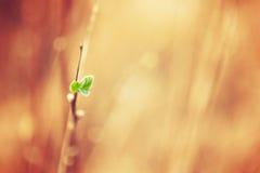 Abstracte de lenteachtergrond Royalty-vrije Stock Afbeeldingen