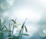 Abstracte de lenteachtergrond Royalty-vrije Stock Afbeelding