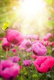 Abstracte de zomer bloemenachtergrond Stock Fotografie