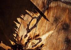 Abstracte details van de rotte stomp met schaduw Stock Foto