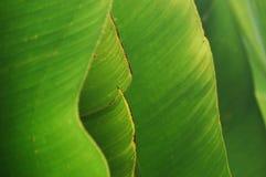 Abstracte die achtergrond van banaanbladeren wordt gevormd Royalty-vrije Stock Foto