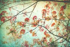 Abstracte die retro achtergrond van Flam-boyant of pauwbloemen door grungetextuur worden gefiltreerd, Chinese stijl stock foto