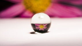 Abstracte die samenstelling met bloem in een bal wordt weerspiegeld Royalty-vrije Stock Foto's