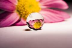 Abstracte die samenstelling met bloem in een bal wordt weerspiegeld Royalty-vrije Stock Afbeeldingen