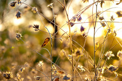 Abstracte distelbloemen stock afbeelding
