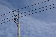 Abstracte elektrische draad met vogel Stock Foto