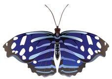 Abstracte exotische vlinder. vector illustratie