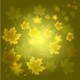 Abstracte floraachtergrond Royalty-vrije Stock Fotografie