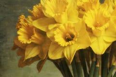 Abstracte foto van gele narcissen Royalty-vrije Stock Foto's