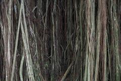 Abstracte foto van het hangen van wortels stock fotografie