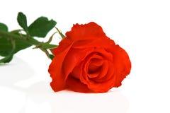 Abstracte foto van roze bloem Royalty-vrije Stock Fotografie