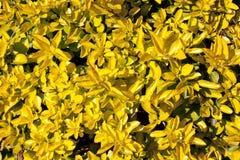 Abstracte Gele Bladeren Stock Foto