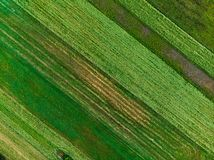 Abstracte geometrische vormen van percelen landbouwgrond van verschillende gewassen in groene en gele kleuren Luchttop down menin stock afbeeldingen