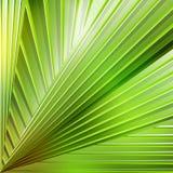 Abstracte gestreepte achtergrond in groene kleuren Royalty-vrije Stock Foto's