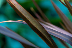 Abstracte Grassen Stock Foto