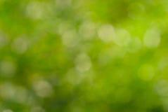 Abstracte groene aard bokeh achtergrond Royalty-vrije Stock Fotografie
